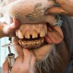 Dental care for your horse