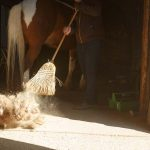 Fly control around your barn