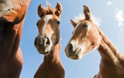 Five Important Ways To Decipher Your Horse's Behavior