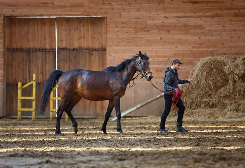 What Is Natural Horsemanship: Clearing Up The Myths