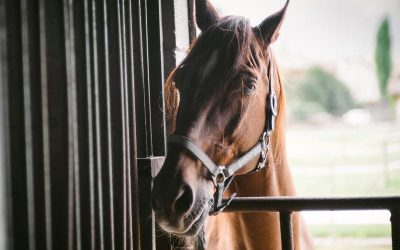 Helpful Tips For Buying Your First Horse