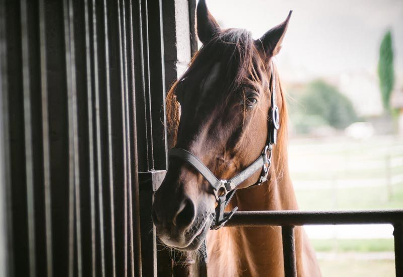 Tips for buying your first horse