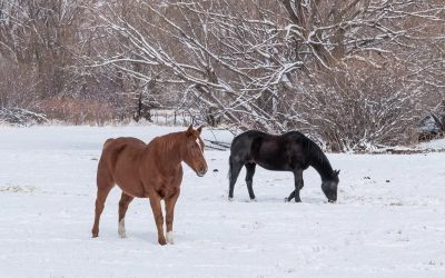 Benefits Of Listing Your Horse Property In The Winter