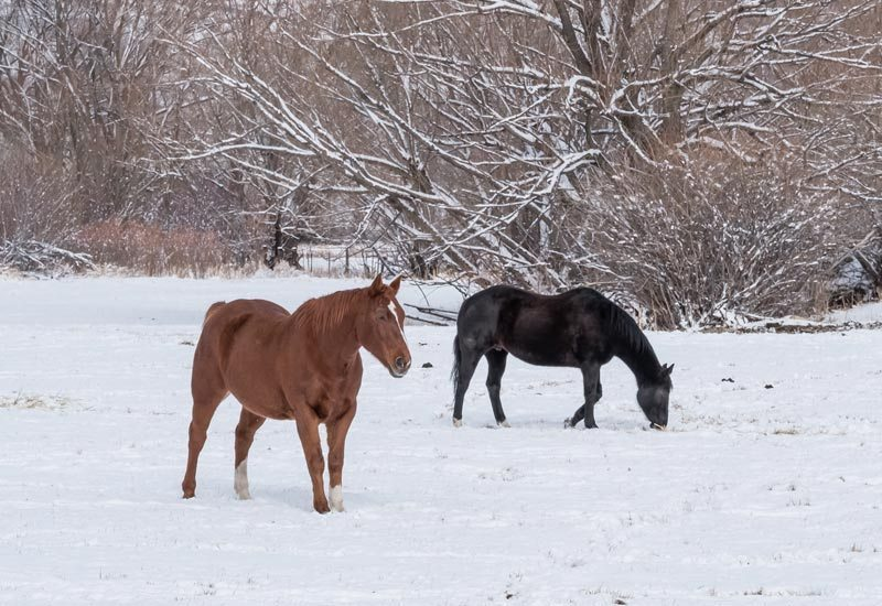 Buy horse property in the winter